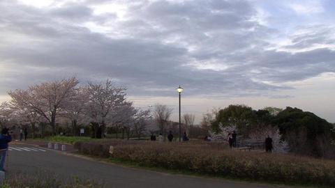 冒頭はこんな感じで…@さくらの山公園
