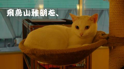『Cat Cafe ねころび』最年長のニャンコ、プリン兄さん