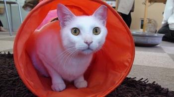 ぷっさん@猫トンネル②
