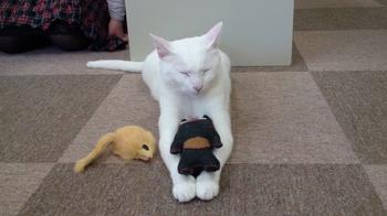 ぷっさんと猫人形+ねずみさん