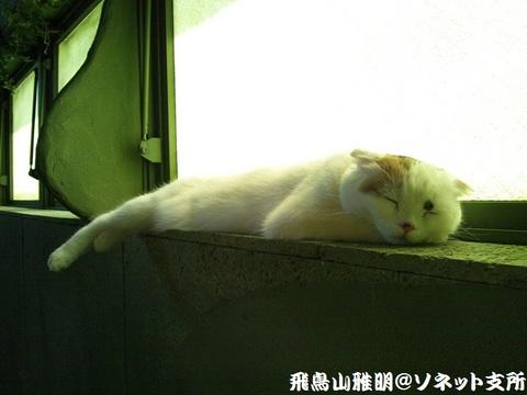 お昼寝中のてまりちゃん@てまりのおうち。この日が通算二度目でした (*^-^*)。